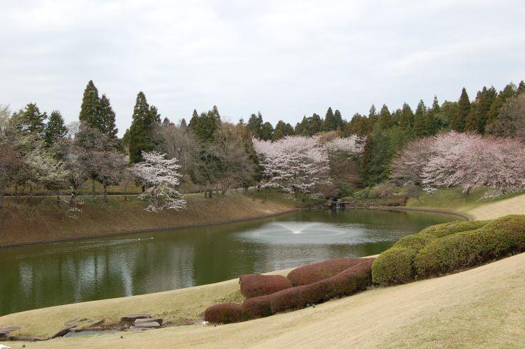川村記念美術館前の池の写真