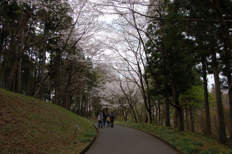 川村記念美術館の遊歩道の写真