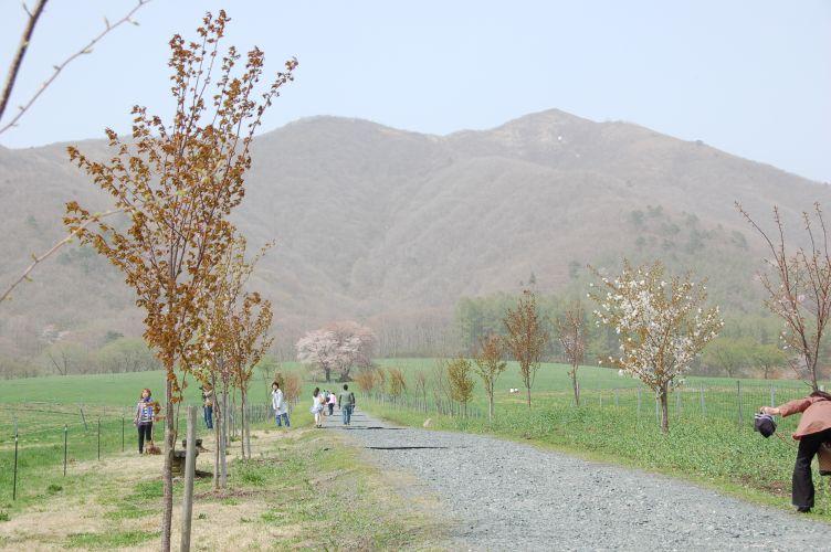 蒜山の写真